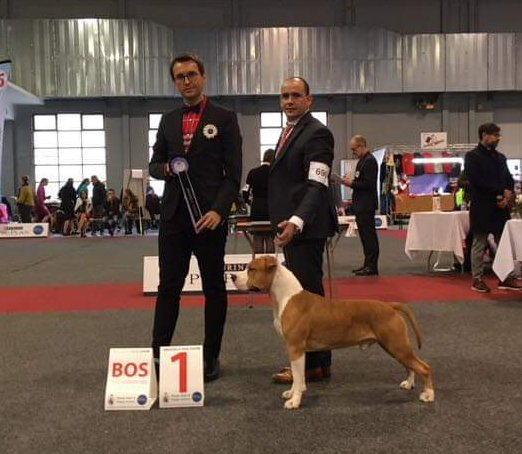Bentley King of Rings - showresultaten