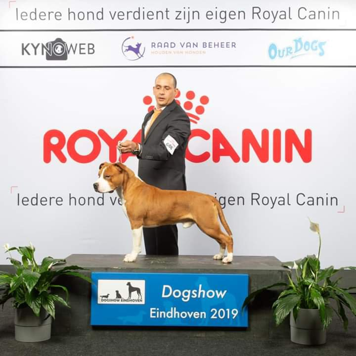 2019 Dogshow Eindhoven - Armagedon King of Ring's